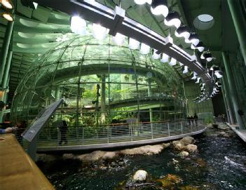 United States of America (USA): California Academy of Sciences in 94118 San Francisco